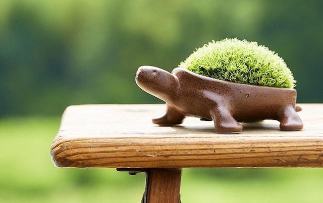 カメの盆栽